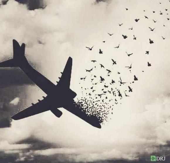 سقوط هواپیمای تهران - یاسوج