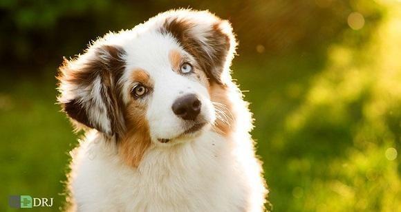 روز جهانی سگ